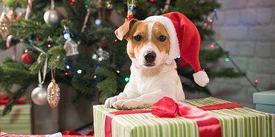 4 Tage Weihnachtsreise mit Hund - travel4dogs