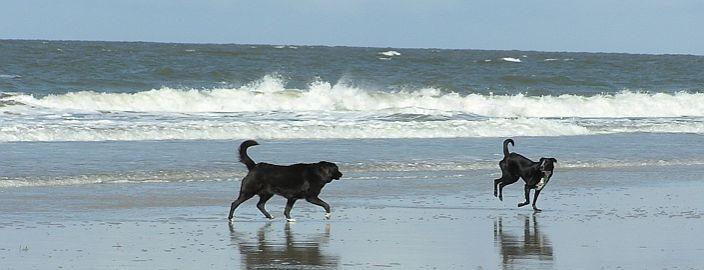 3 Tage Kurzurlaub mit Hund Nord-Holland