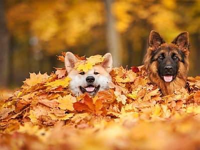 Herbsturlaub mit Hund - travel4dogs.de