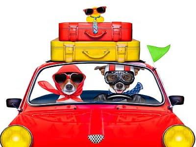 Reisepartnerbörse von travel4dogs für reiselustige Hundebesitzer