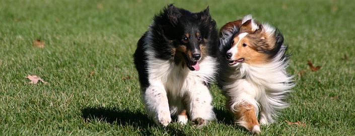 Kurzurlaub mit Hund im Schwarzwald