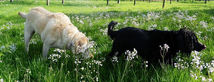 Kurzurlaub mit Hund im Westerwald © M. Großmann/pixelio.de