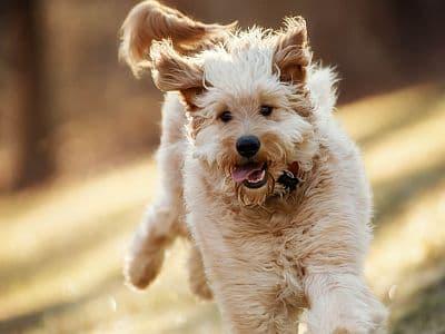 Wanderpauschalen mit Hund | travel4dogs