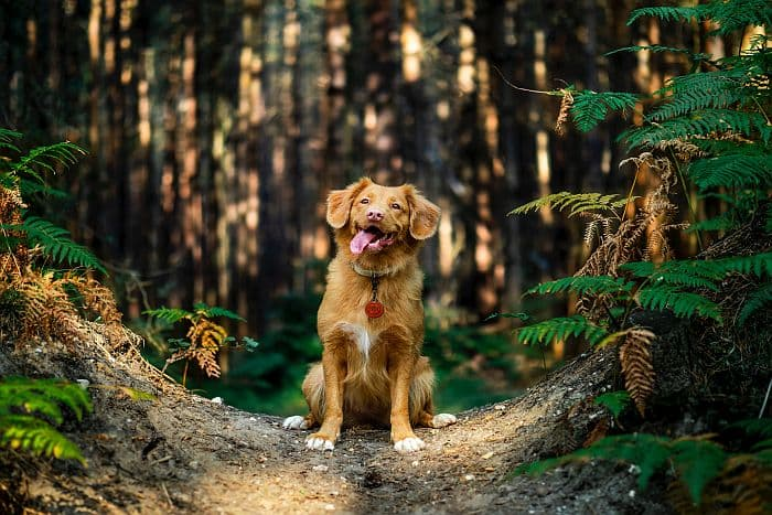 3 Tage Kurzurlaub mit Hund im Schmallenberger Sauerland