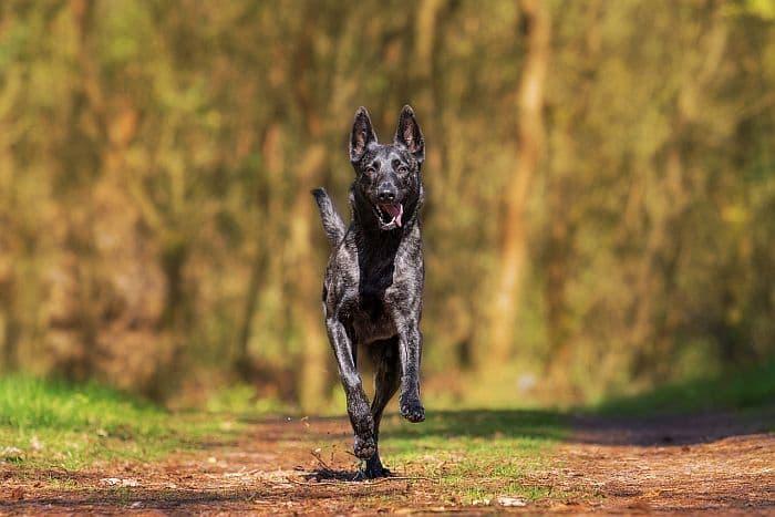 Wellnessurlaub mit Hund - travel4dogs
