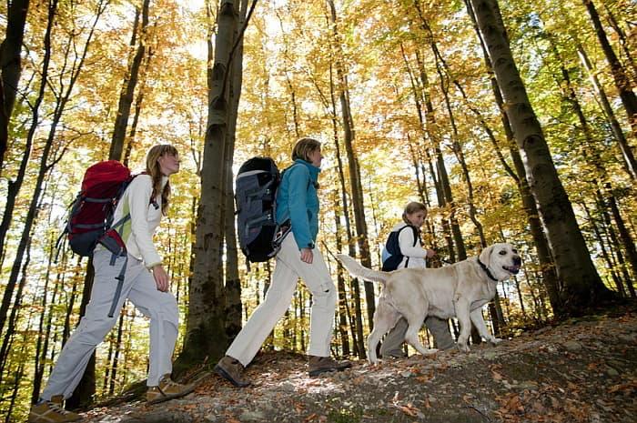 5 Tage Wandern mit Hund auf dem Eifelsteig