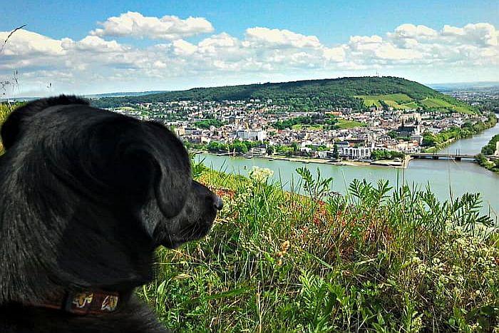 5 Tage Wanderreise mit Hund auf dem Rheinsteig - travel4dogs