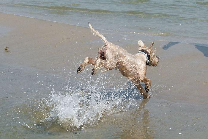 Wandern mit Hund Rügen Mönchgut mit travel4dogs