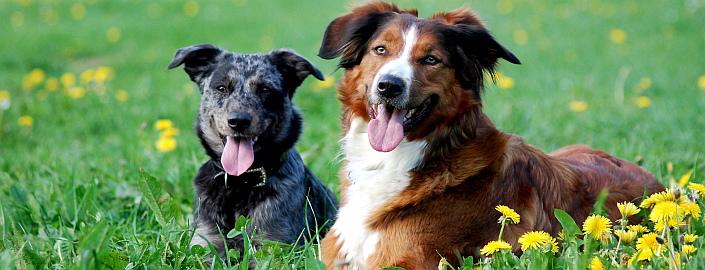 6 Tage Urlaub mit Hund im Westerwald