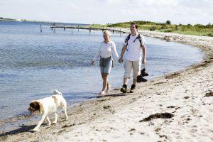 Urlaub mit Hund in Dänemark - Mit Hund am Strand in Dänemark