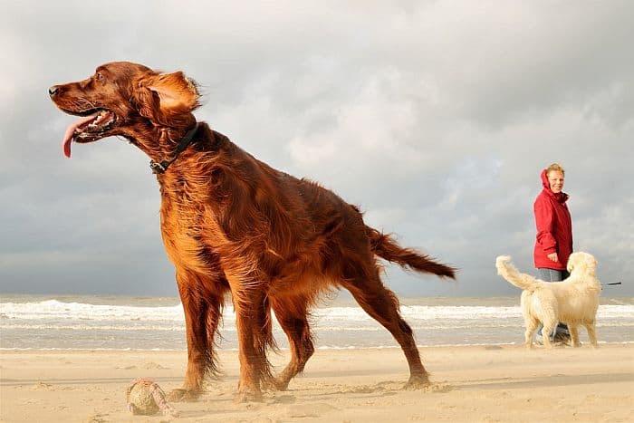 3 Tage Nordseeküste mit Hund im 4-Sterne Strandhotel