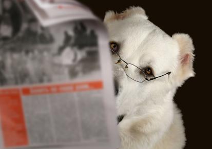 Urlaub mit Hund - Informationen zu Reisem mit Hund